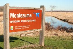 Montezuma Wild Life